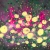 夜半に灯る花